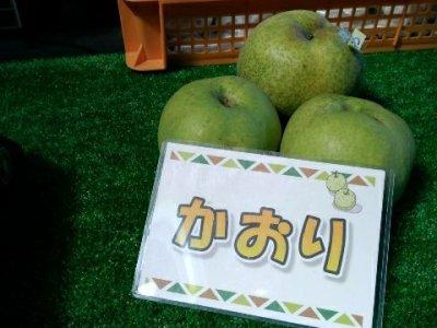 【2017/9/19】かおり 梨の収穫! 42