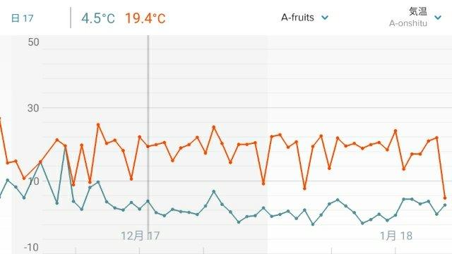 【農業センサーで無加温ハウスの室温を計測】-2℃にタッチしたけどフィンガーライムは無事! 24