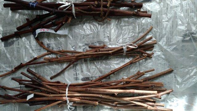 【ブドウの接ぎ木の手順】接ぎ木鋏を使ったブドウの接ぎ木方法を画像で解説 162