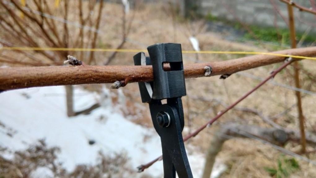 【プライヤー式の環状剝皮ばさみレビュー】梨・キウイ・桃の側枝に環状剥皮処理・取り木をするのに便利 130