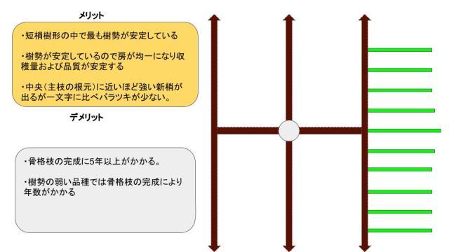 【短梢剪定の種類】各々の樹形のメリット・デメリットを解説 14