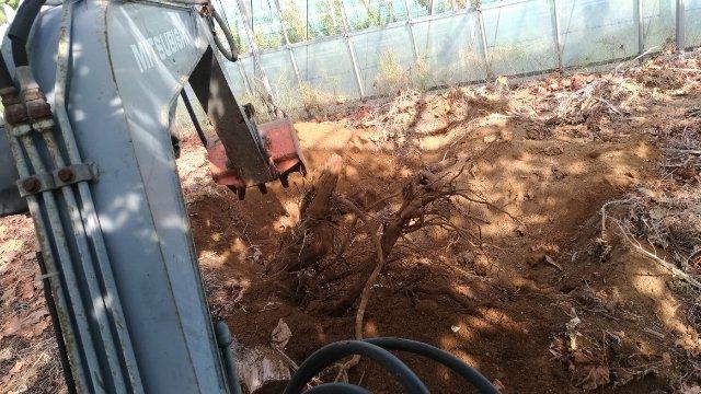 【改植】ブドウの木の入れ替えで生産量UPを目指す 55