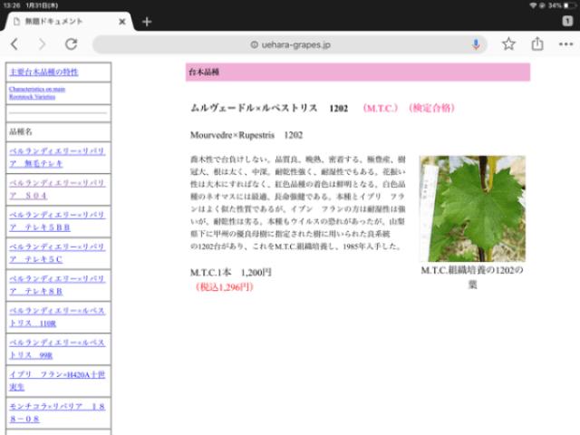 【台木の種類】ブドウの台木は畑に合わせて変える 19