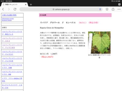【台木の種類】ブドウの台木は畑に合わせて変える 3