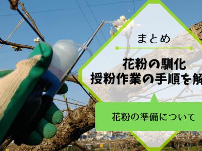 梨の花粉の馴化・授粉作業の手順を解説【受粉方法まとめ】 34