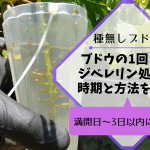 【種なしブドウの作り方①】1回目のジベレリン処理の時期は満開日~3日以内に行う 102