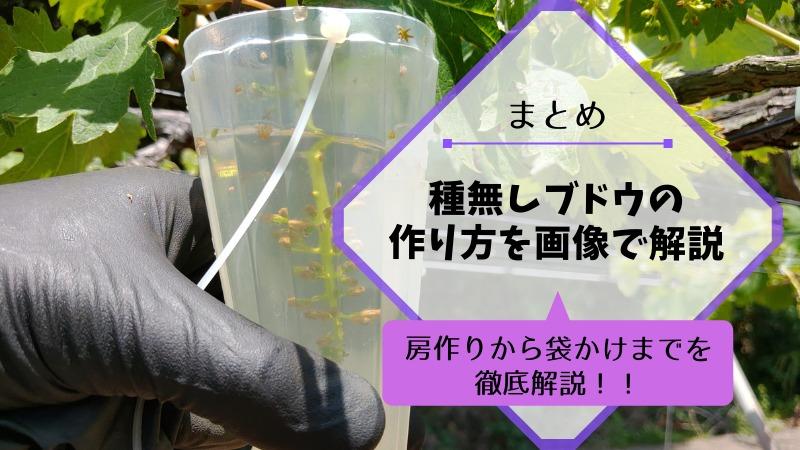 【まとめ】種なしブドウの作り方を画像で解説【ジベレリン処理・房作り・摘粒の時期と方法】 571