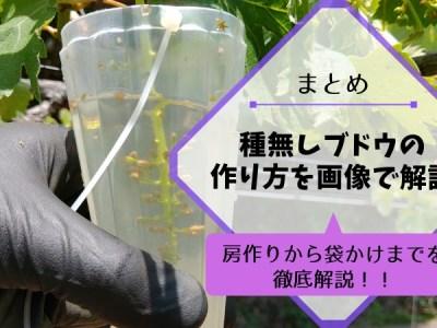 【まとめ】種なしブドウの作り方を画像で解説【ジベレリン処理・房作り・摘粒の時期と方法】 38