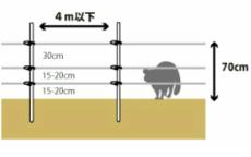 【ブドウのハクビシン対策】被害を防ぐための電気柵の設置方法を解説 51