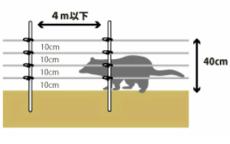 【ブドウのハクビシン対策】被害を防ぐための電気柵の設置方法を解説 50