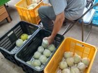 梨の選果機