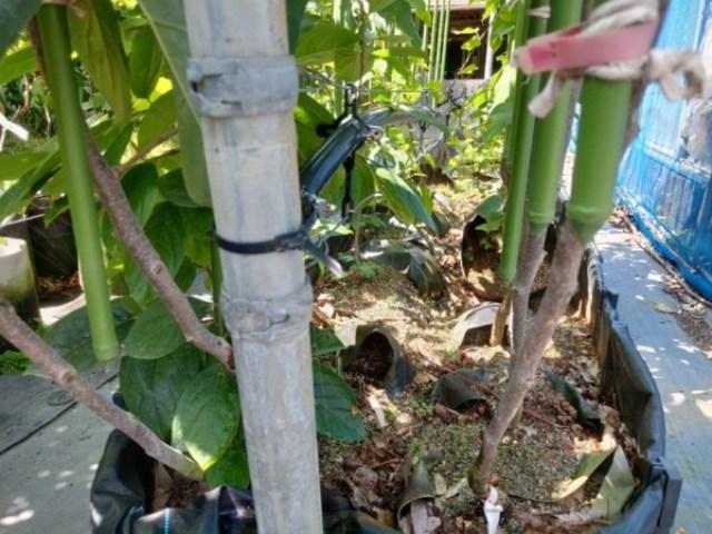 【エバフローの種類と設置方法】苗木の潅水方法を解説 31