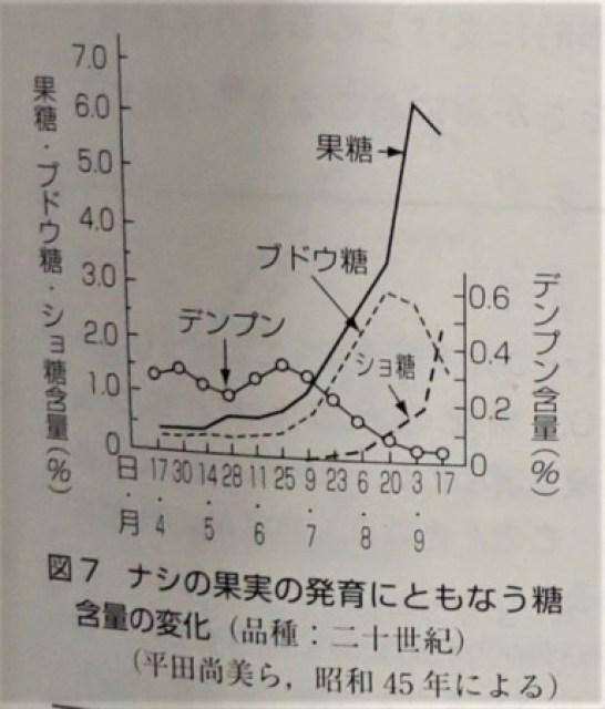 梨の糖含量の変化