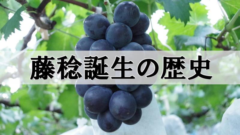 藤稔(ふじみのり)誕生の歴史 1