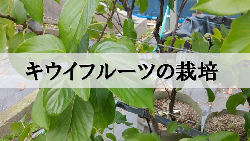 キウイフルーツの栽培・育て方を解説