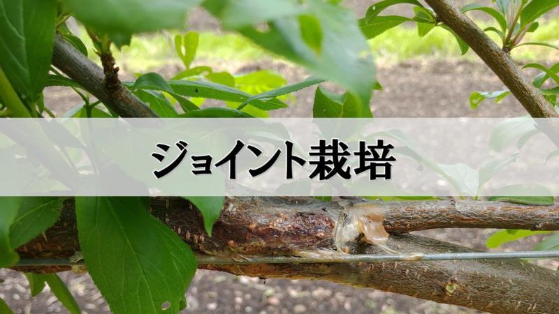 ジョイント栽培の方法を解説