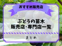 ぶどう農家おすすめのブドウの苗木販売店・専門店一覧【まとめ】 22