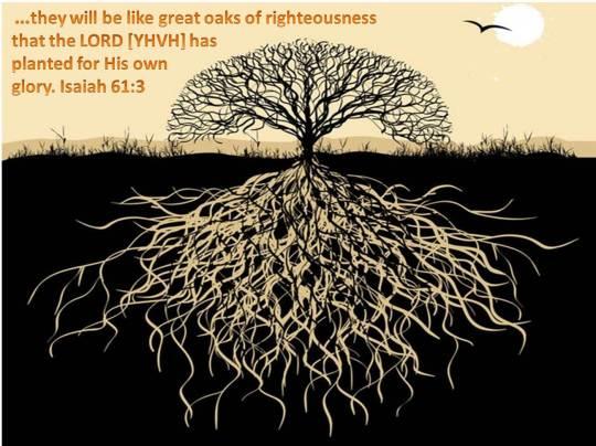 righteous-oaks1