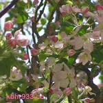 blossom2-thumb