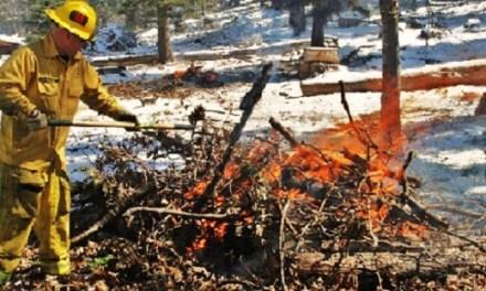 Prescribed Burn on Angelus Oaks Understory Burn Project