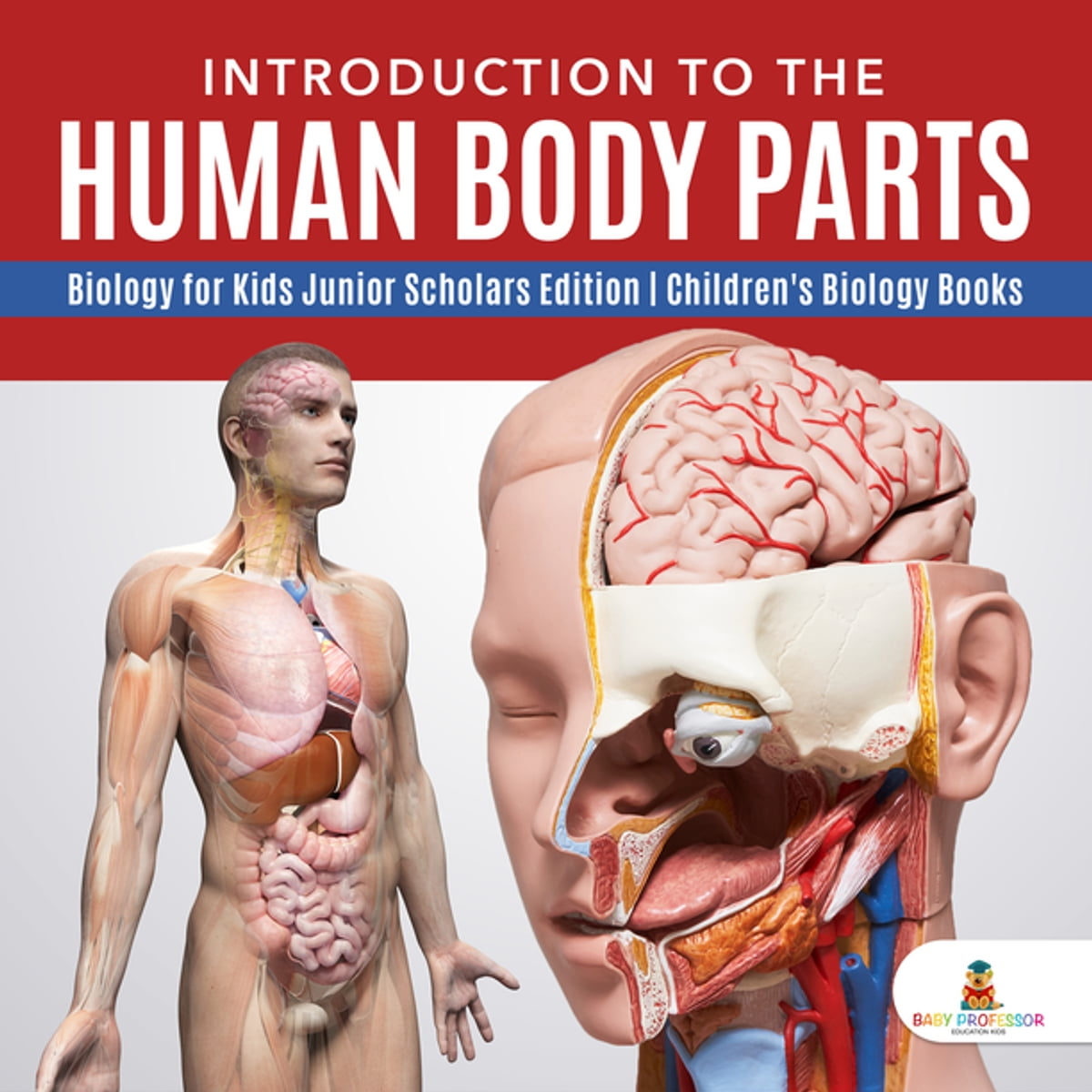Introduction To The Human Body Parts Biology For Kids Junior Scholars Edition Children S Biology Books Ebook By Baby Professor 9781541965102 Rakuten Kobo United States