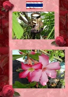 Thai Blumen und Pfanzen Photobuch von Heinz Duthel: Mit schoenen Haus und Garten Blumen, Pflanzen…