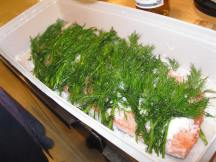 The start of gravlax - salmon covered with dill.
