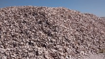 A literal mountain of oyster shells.