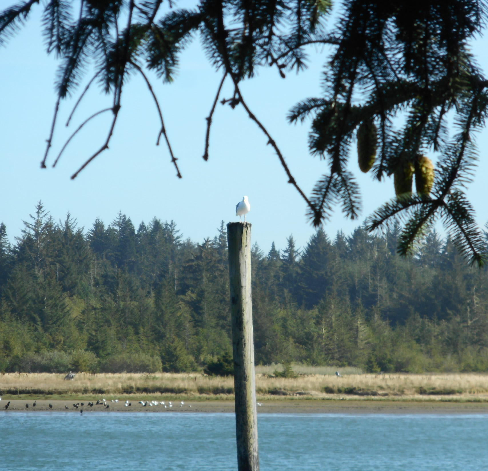 Coquille River Sentry