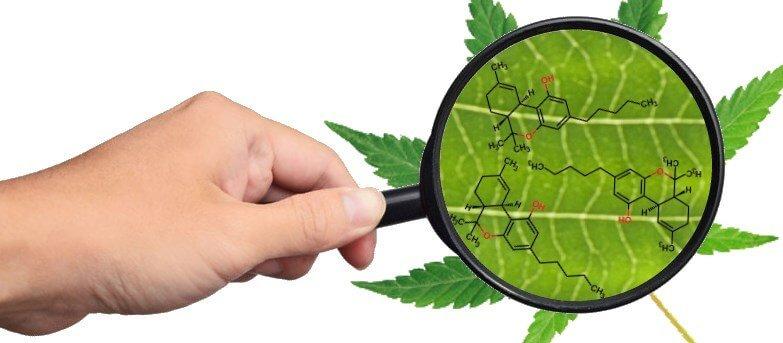 Top Cannabinoids