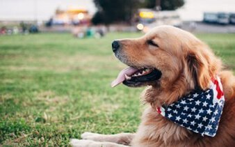 CBD Can Help Your Pet's Anxiety
