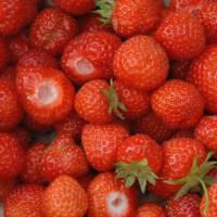 Erdbeeren - die rote Verführung