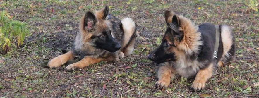 Коррекция проблемного поведения у собак