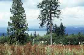 Cougar Mountain Regional Wildlife Park, Aug 1994 (ref ID 467.2.24)