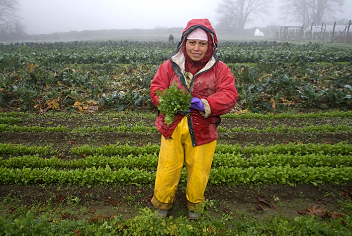 Yolanda Works the Fall Harvest at Oxbow Farm, Carnation, Washington, US