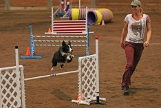 """Melanie Rock runs through an agility course with her border collie at the Ingham County Kennel Club on Nov. 27, 2015 in the MSU pavilion in Lansing, Michigan. She started off showing horses, and now shows and trains dogs for agility competitions. She has had 5 dogs that she has explicitly trained and shown for agility in the past ten years. """"You've got to let the dogs think that they're always right so they have a good time,"""" Rock shared."""