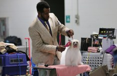 """Ray Cash grooms a Chinese crested powder puff that he bred before going into the ring at the Ingham County Kennel Club on Nov. 27, 2015 in the MSU pavilion in Lansing, Michigan. He has been showing dogs for twelve years, but originally started off showing miniature horses. He transitioned into dog shows when you became a groomer to pay loans for very school. """"I love being a handler. The comradery, dogs and people. There are nice and not so nice people in this sport, but I just kill them with kindness,"""" Cash shared."""
