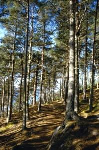viewpoint-at-lochalsh-woodland-garden