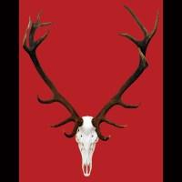 Deer Scull Wall Art