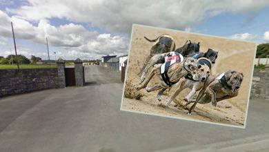 Greyhound racing at Kilkenny Greyhound Track, St. James' Park