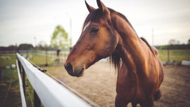 Image of a horse (Stock photo)