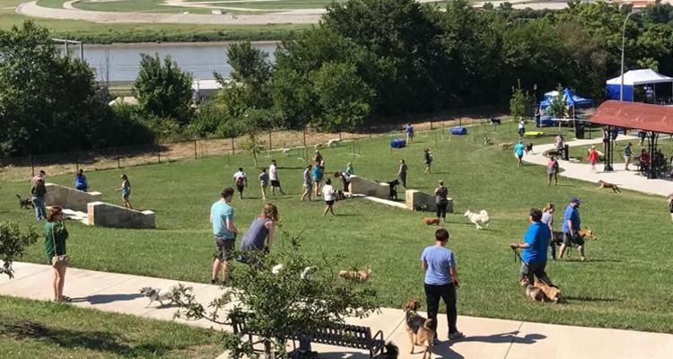 Image result for dog parks