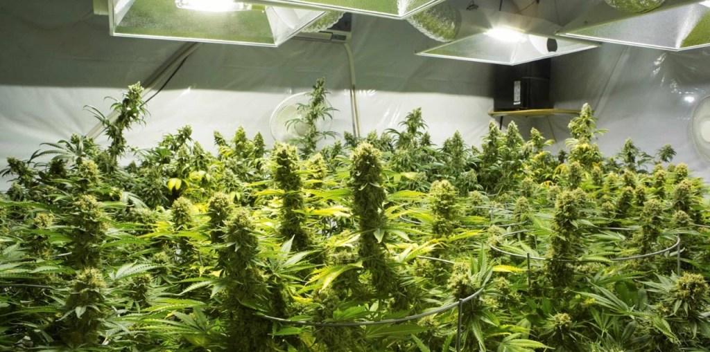 find missouri marijuana caregiver