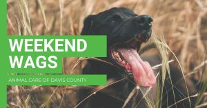Weekend Wags @ Animal Care of Davis County |  |  |