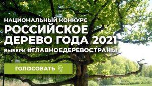 Голосование в конкурсе «Российское дерево года 2021»