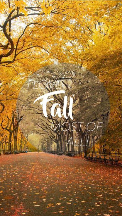 fall-iphone6-wallpaper-01