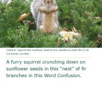 Word Confusion: Fir versus Fur