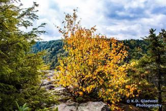 Blackwater Canyon in Fall