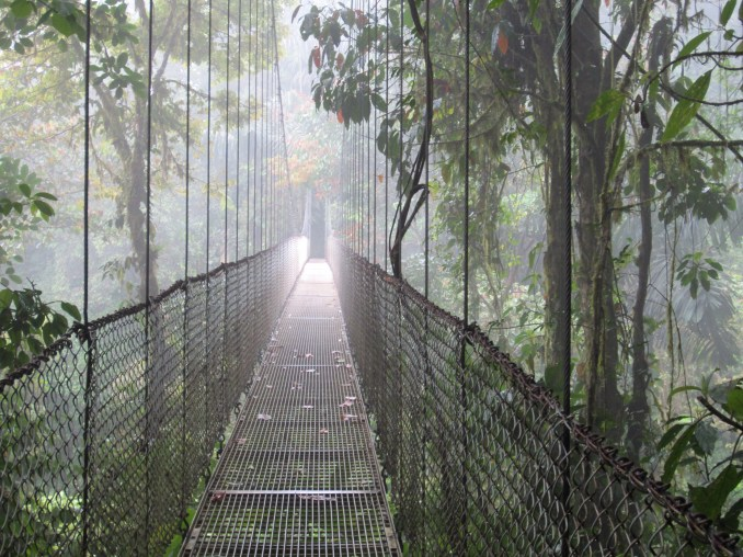 Suspension bridge over jungle canopy