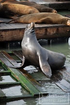 Sea Lions at Pier 39 in San Francisco. October 2007. Nikon D80 with 18-135 lens.
